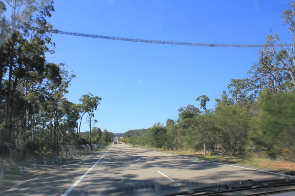 Koalaübergang